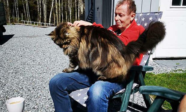 5 котов, которые выросли больше крупных собак