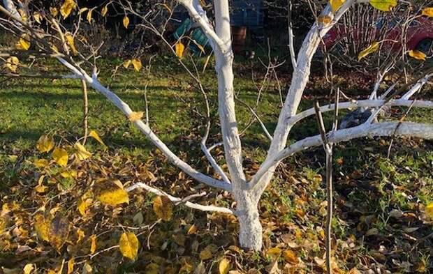 Мазь Вишневского - мой помощник в огороде осенью. Как ее применять и какого результата ожидать?