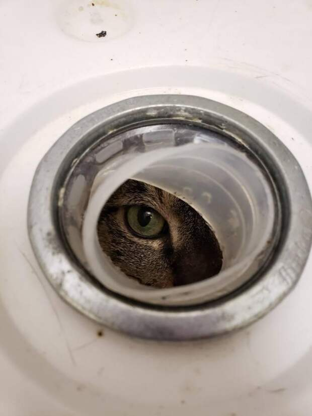 Очередной пример жестокости человека: избавились от кошки, заточив в бак