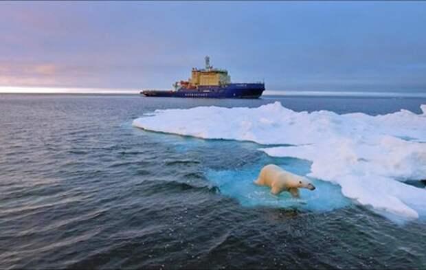 Спасенного в Арктике белого медвежонка отправили в Московский зоопарк