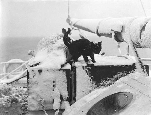 Как кошки в море ходили