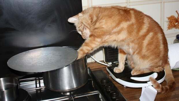 Мужчина на кухне: Как я варил борщ по рецепту из Интернета