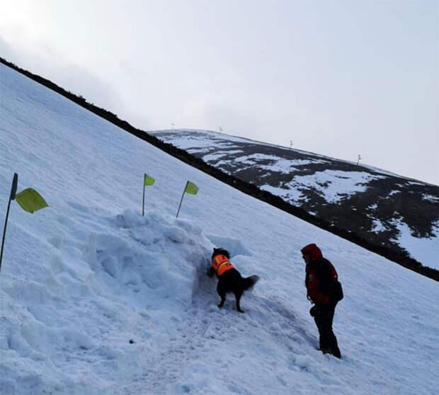 Инструктор закопался в снег, чтобы проверить, как собака-спасатель будет его искать