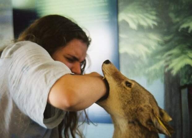 Методы оказания помощи после укуса собаки