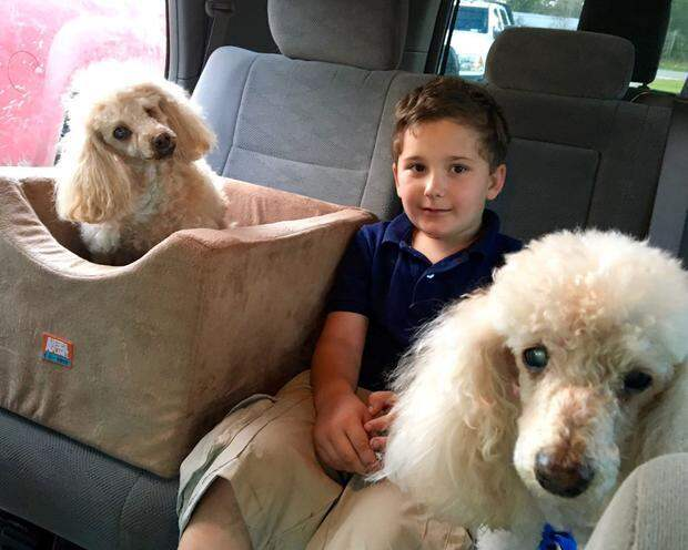 Мальчик усыновляет из приюта только старых собак, которых никто не хочет брать в семью