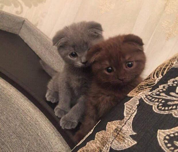 17 самых мимимишных котят для тех, кому хочется поднять себе настроение