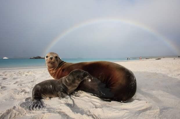 Галапагосский морской лев, фото