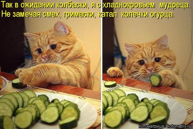 Котоматрица: Так в ожидании колбаски, я с хладнокровьем  мудреца. Не замечая смех, гримаски, катал  колечки огурца.