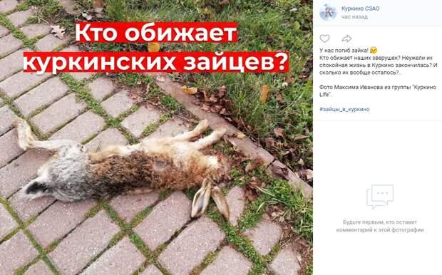 В Куркине погиб заяц