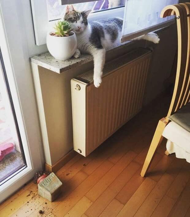 Кошки-проказницы, которые поднимут всем настроение