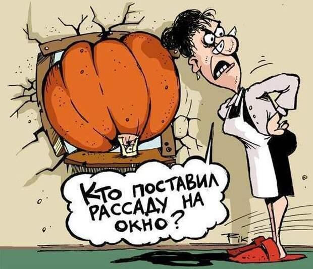 """Номинация """"Рассада"""", фото с сайта svadba-kursk.ru"""