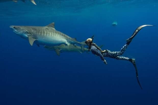 Дип Блю - самая огромная белая акула в мире. Уникальные фото гиганта Великая Белая Акула, акула, наука