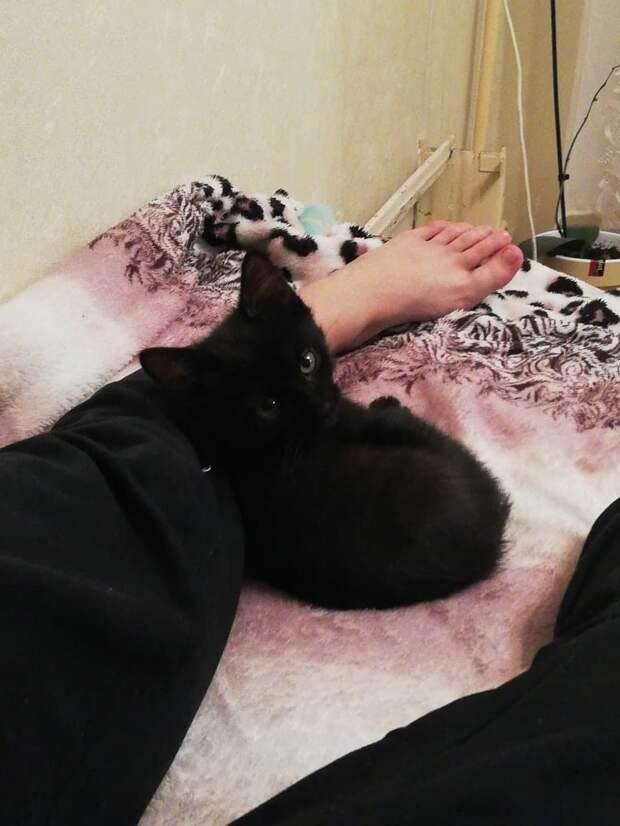 У девушки не было и мысли завести кота, пока на улице к ней не подошёл знакомиться котёнок