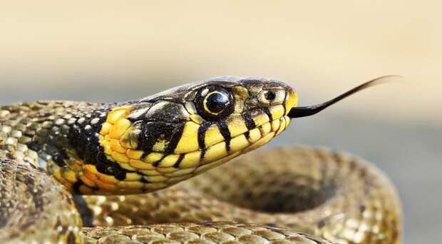 Как защититься от змей на даче и в лесу