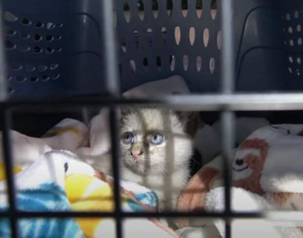 Хозяева выбросили котёнка на парковке и уехали. Малыш всё понял и заплакал