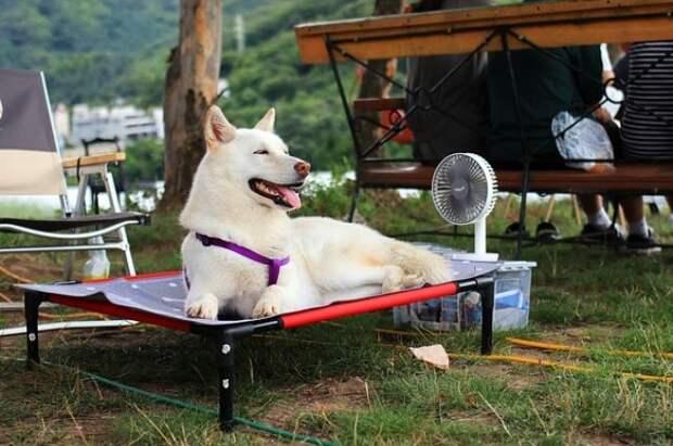 Ветеринар дал советы владельцам домашних животных в жару