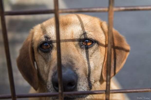 Законы о защите животных в разных странах мира