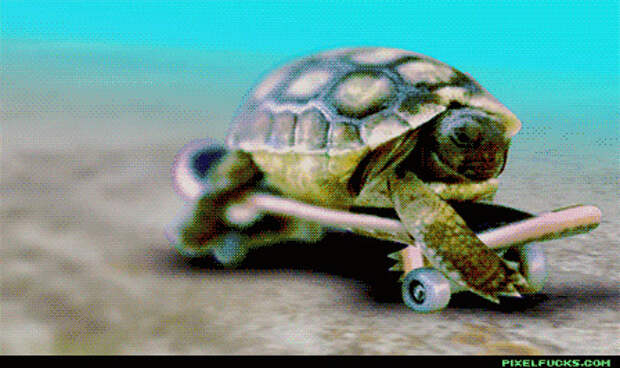 животные, факты, черепаха