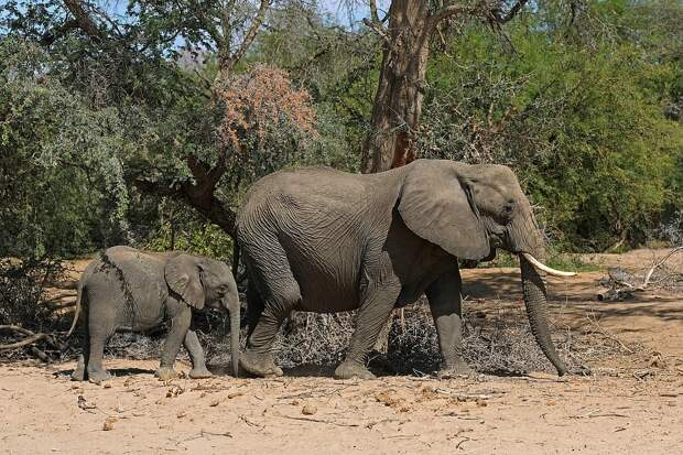 Специалисты уже собрали анализ с мертвых слонов и изучают причину их массовой гибели