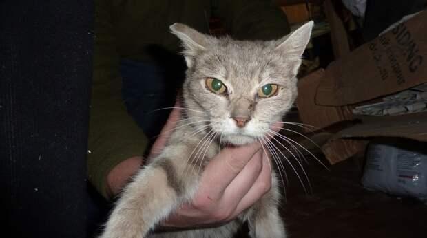 Запертая на складе кошка плакала и звала на помощь, но люди за стеной ее не слышали. Но зато услышал кот!