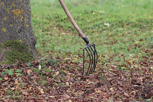 Садовое Оборудование, Грабли, Форк, Осенью, Листья
