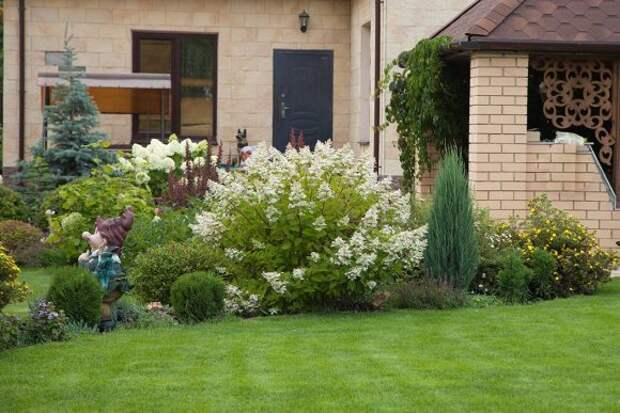 Гортензия в ландшафтном дизайне: примеры оформления садового участка