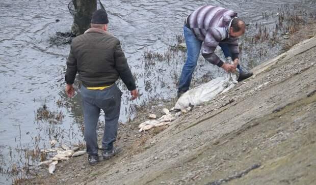 В 20 раз выросли продажи экипировки из-за рыбаков на Северном водохранилище в Ростове
