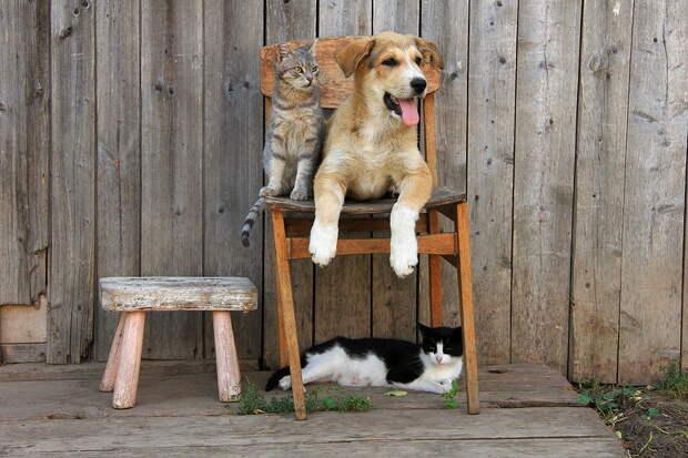 Восторг! Деревенская идиллия в фотографиях Сергея Красноперова
