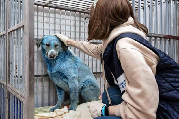 Ярко-голубых собак из Дзержинска доставили в госпиталь