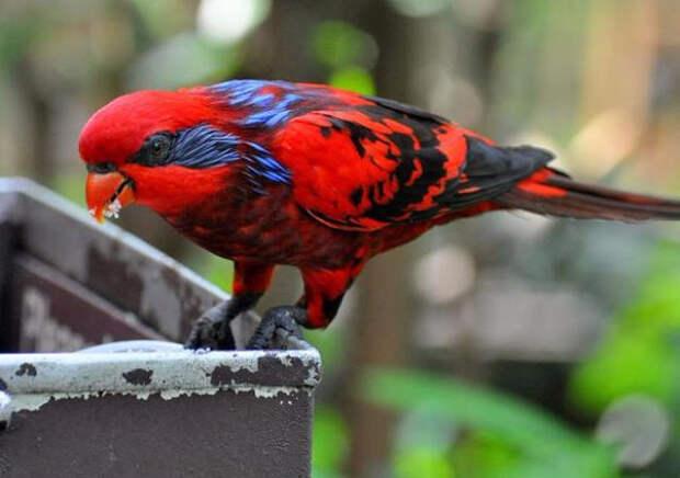 Birds_39 (700x493, 245Kb)