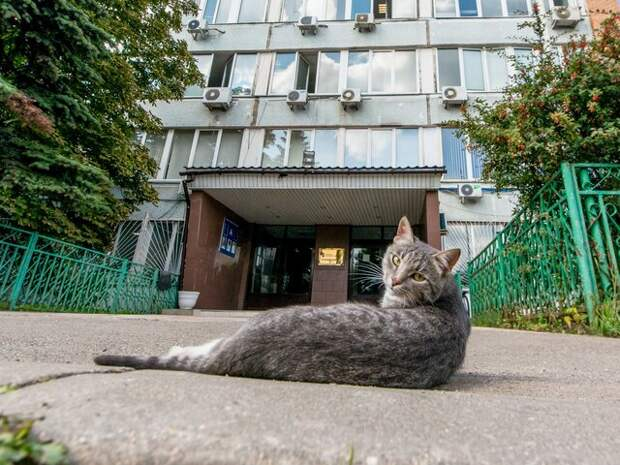 В Госдуме предложили запретить самовыгул животных