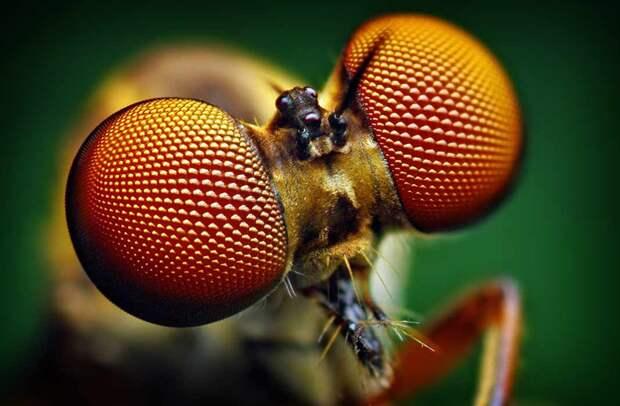 20 удивительных фактов о насекомых