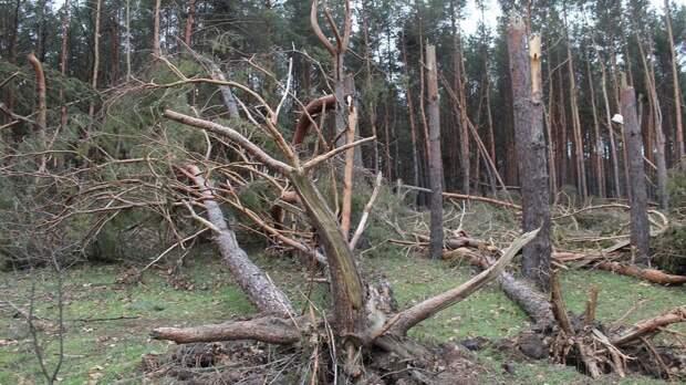 Ростовчан предупредили опадении деревьев из-за ураганного ветра