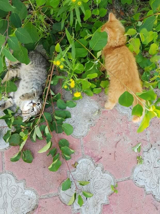 Какой вред приносят кошки огороду и как с этим бороться