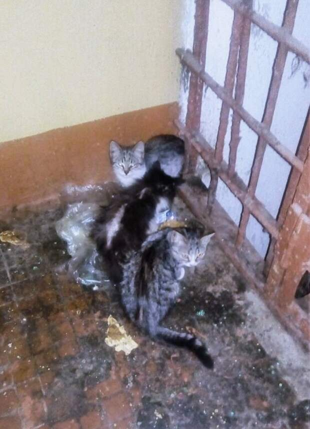 Помогите, хотя бы передержкой!!! Уборщица крайне недовольна присутствием малышей, постоянно выкидывает еду и гоняет их...