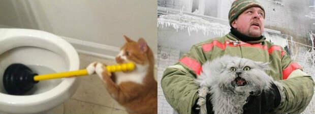 Продлевая жизнь: наэтих котов невозможно смотреть без смеха
