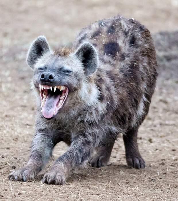 Кто из живых существ на Земле самый кусачий и насколько сильны их челюсти?