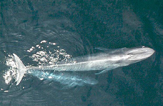 В Хабаровском крае спасли кита, «севшего на мель»