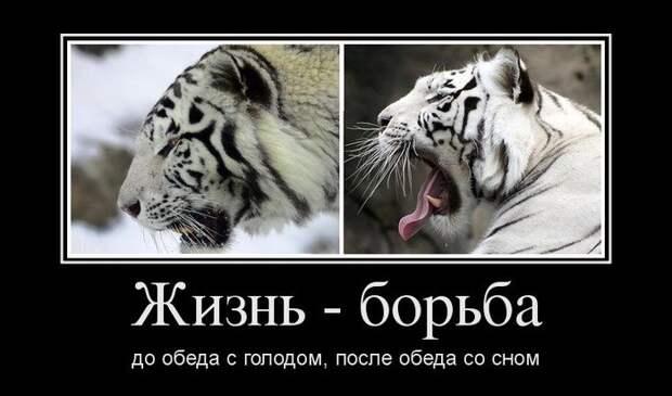 Подборка веселых и смешных демотиваторов из жизни (11 фото)