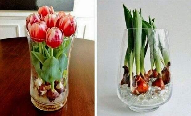 Тюльпаны круглый год