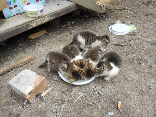 Помогите! Это очень срочно! На улице шесть беззащитных малышей!