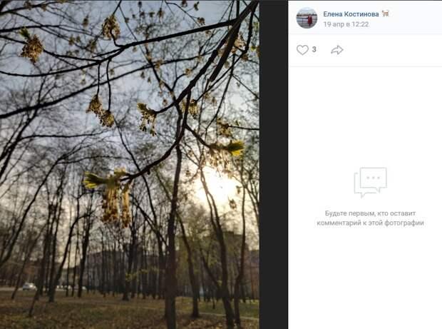 Фото дня: «оживающие» деревья в Петровском парке