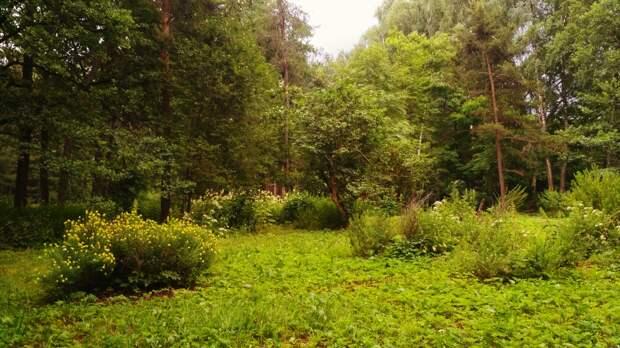 Жители Марфина присоединятся к уборке Ботанического сада