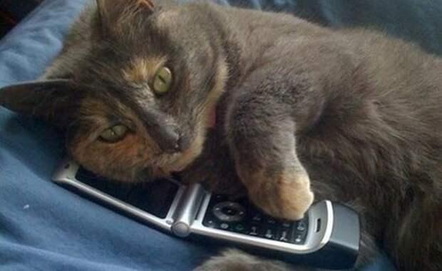 Спам по телефону