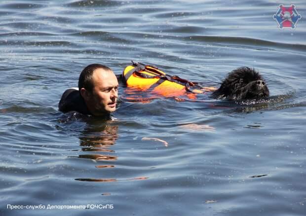 На собственном опыте: как проходят тренировки собак-спасателей