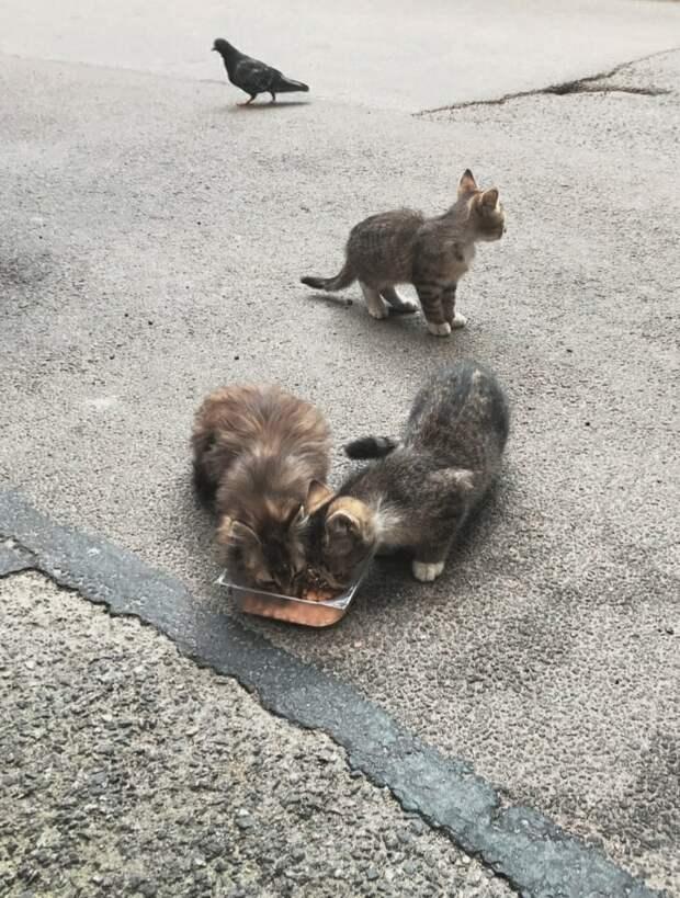 У нам с вами есть выбор!!! Выбор взять котят на время или пройти мимо, надеясь, что поможет другой...