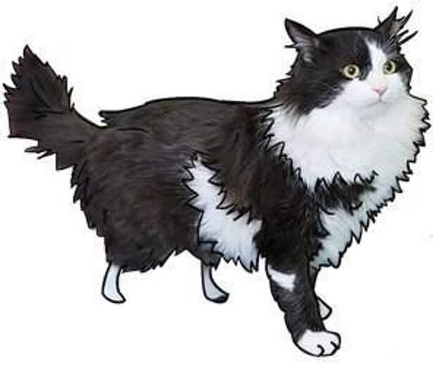 В моей жизни появился кот