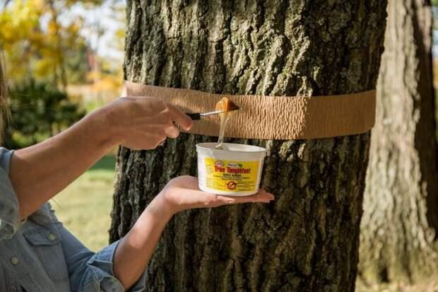 Ловчий пояс для дерева своими руками
