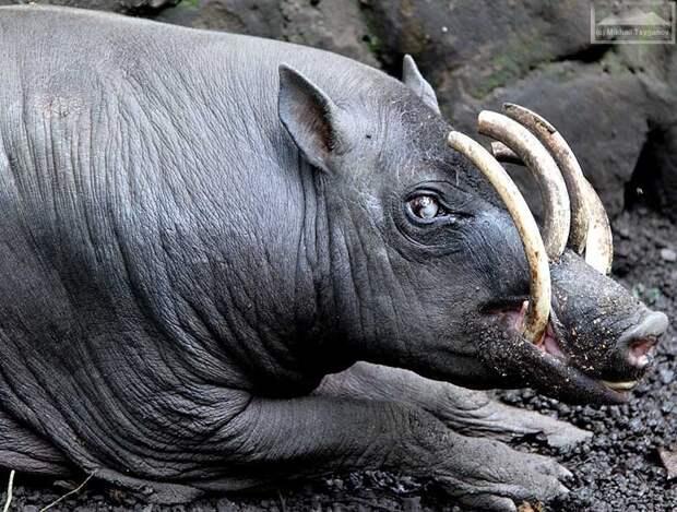 Самые странные животные мира