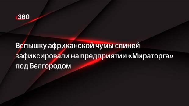 Вспышку африканской чумы свиней зафиксировали на предприятии «Мираторга» под Белгородом